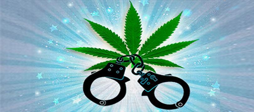 В подвале Новосибирского НИИ аспирант выращивал марихуану.
